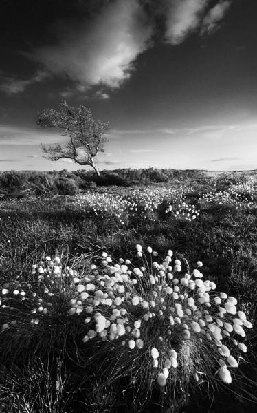 Cotton Grass Carpet by Trevhas