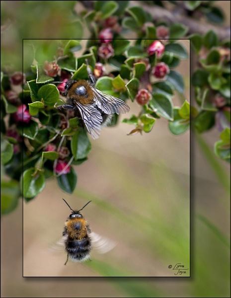 Bee Time Me time by LynneJoyce