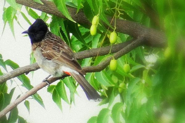 "\"" BIRDS \"" by abssastry"