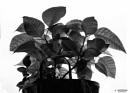A plant by saltireblue