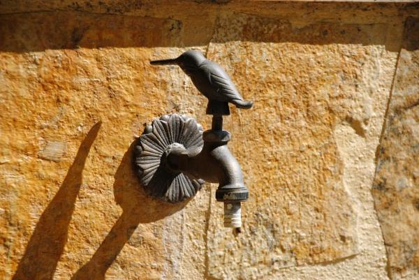 Watch the birdie... by Chinga
