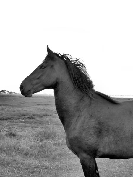Stallion by steve_i