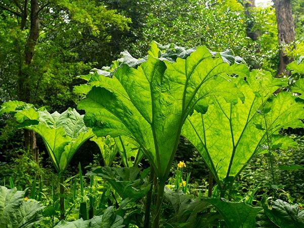 Bog Garden by victorburnside