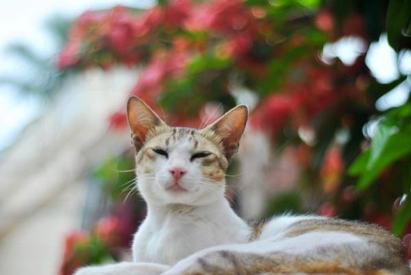 Cat by jamesthalakottur