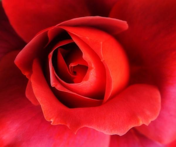 Rose Hot Chocolate by PrunellaCara