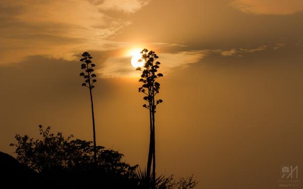 Golden Sunrise by perceptive_imagination