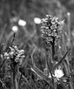 Back garden bog  --  weekly b&w challenge Organic by Snapper