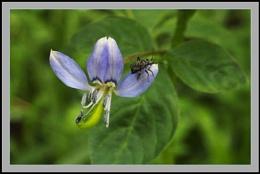 A tiny wild flower