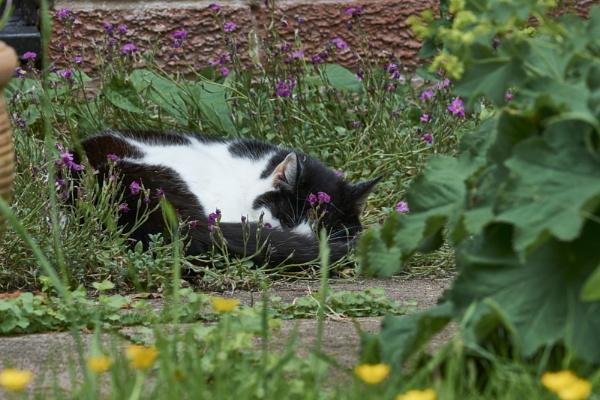 My catnip ... all mine by Meditator