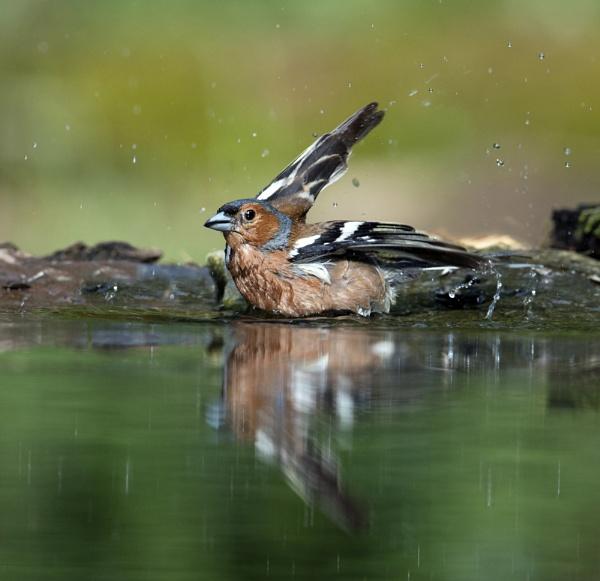 Bath Time by hasslebladuk