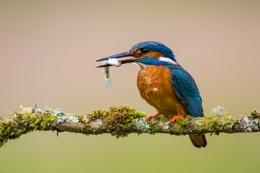 Fish supper!