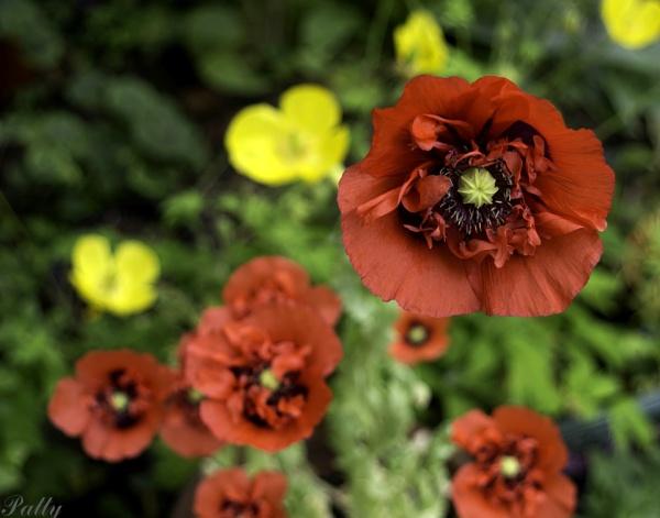 Summer garden by pentaxpatty
