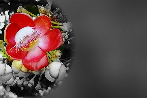 ""\""""  FLOWER  """" by abssastry""600|400|?|en|2|1e627736bae68179b38a08270fdbd3c5|False|UNLIKELY|0.2852221727371216