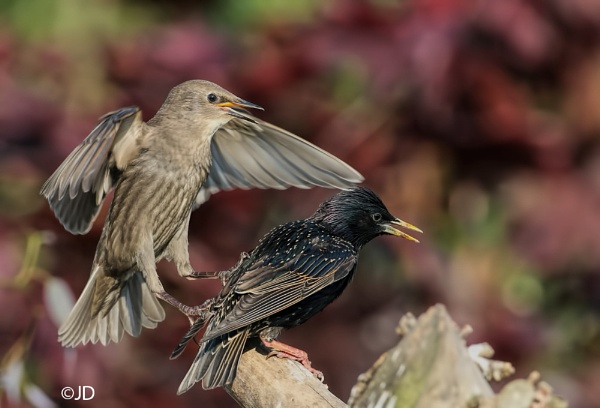 Get Off My Back......... by NaturesHaven