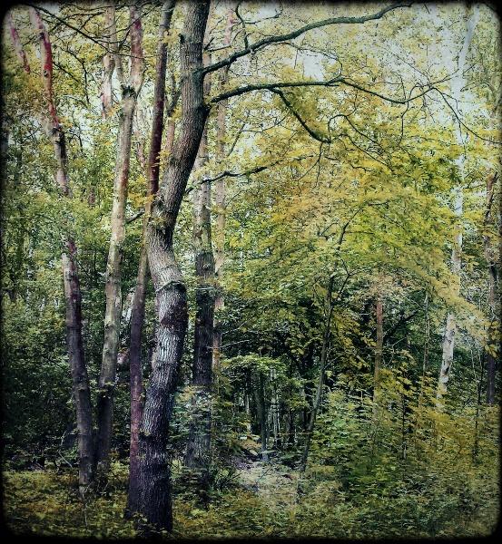 Danbury Woods by enfys
