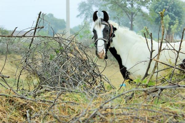 the horsy look by ShiveeAswal