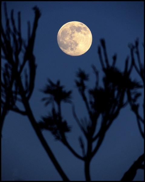 Pale yellow moon by Aldo Panzieri
