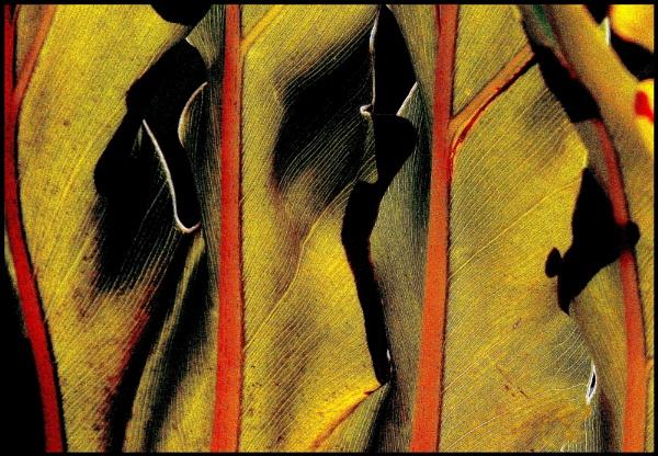 Tropical Leaf by Aldo Panzieri