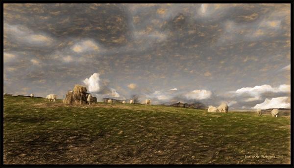 Wild Fell Sheep by jonirock