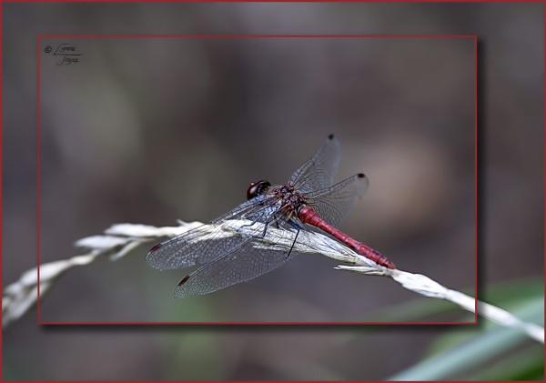 French Bugs (4 of 23) by LynneJoyce