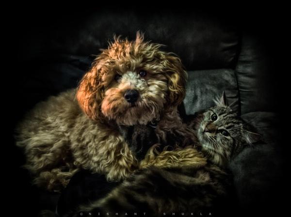 Fluff Vs Fur by nishant101
