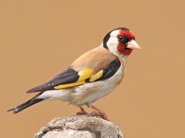 Birds in my garden.3. by bobpaige1