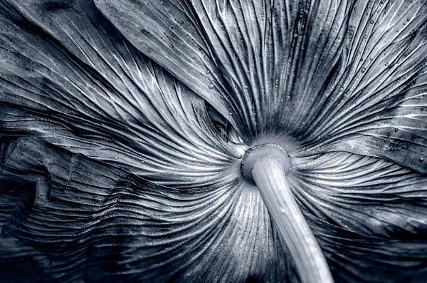 Poppy Petals by flowerpower59