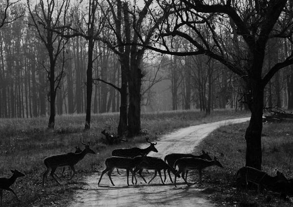 Spotted Deer by kedargore