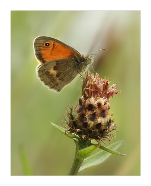 Small Heath. by Graham_P