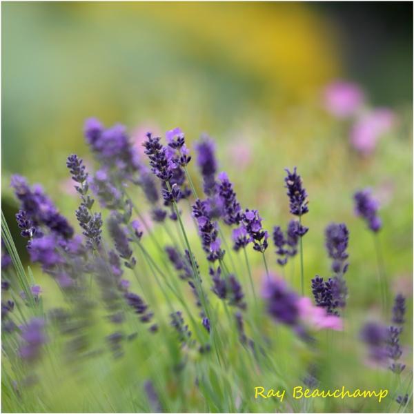 Purple Breeze by RLB
