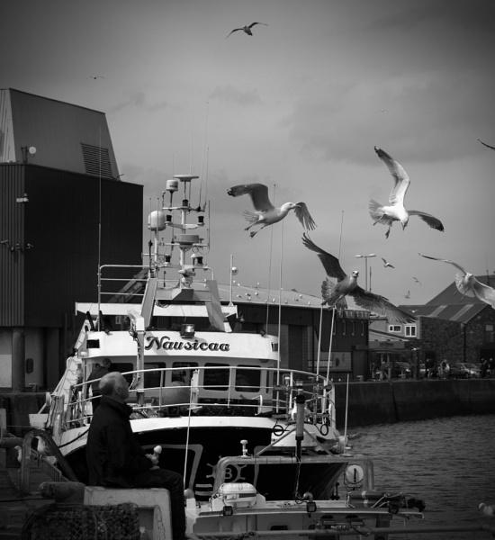 The birds by lynam