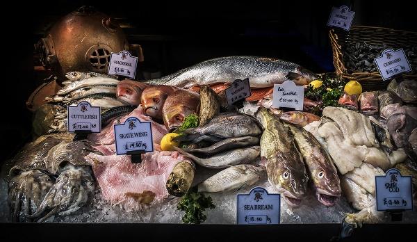 Sea Bream, Thirteen Pound a Kilo by BydoR9