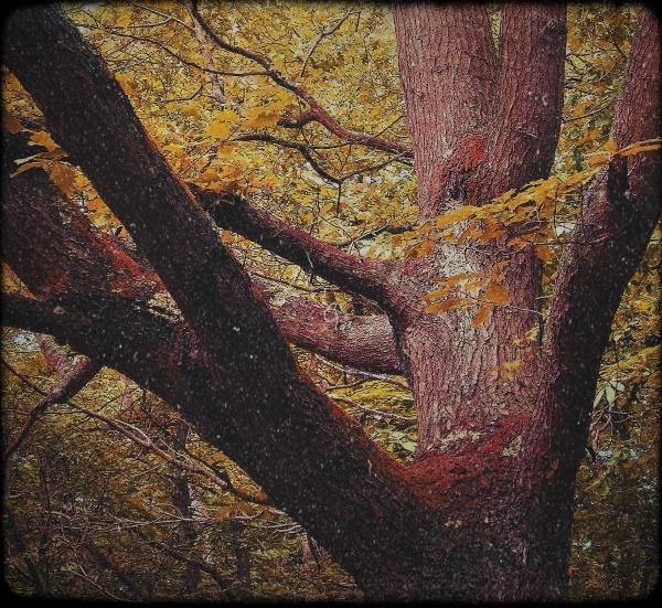 oak~fall by enfys