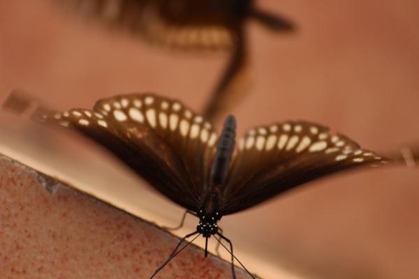 Butterfly!! by rajibcee1