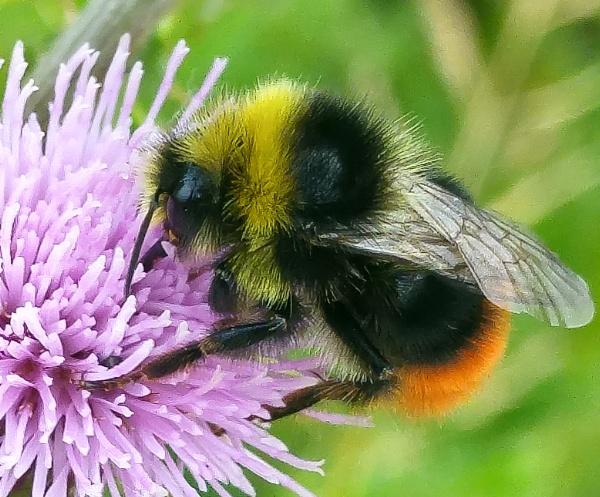 Bee on a run by carlw