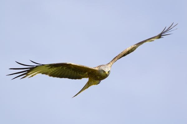 kite by sjk123
