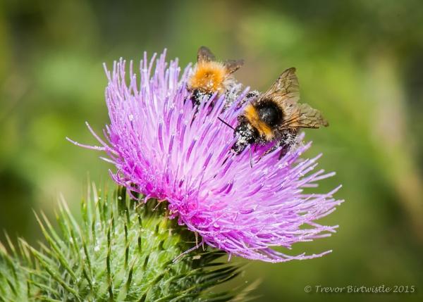 Pollen Collectors by Trev_B