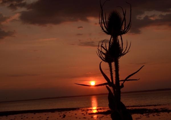 Thistle Sunset by TonyBrooks