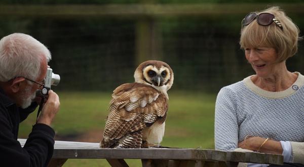 Artful Owl by dudler