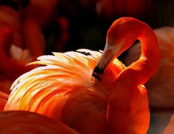 Flamingo Light by iscramble
