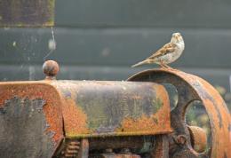 Sparrow on a Flywheel