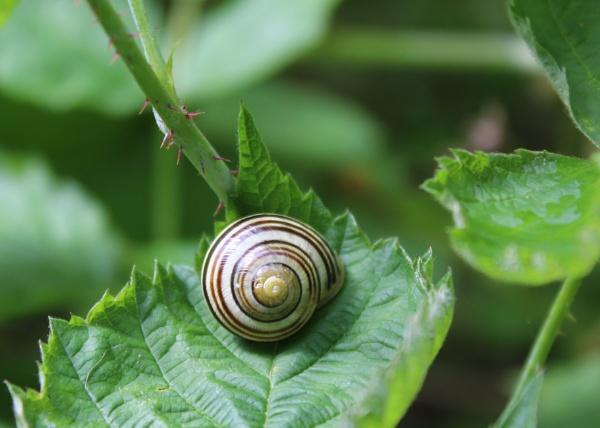 Snail by Ian72