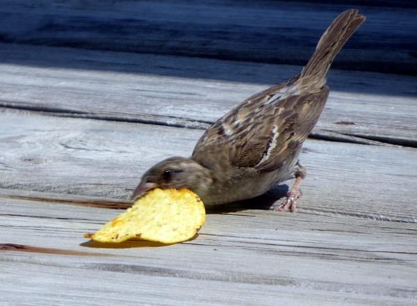 Potato chip thief by doerthe