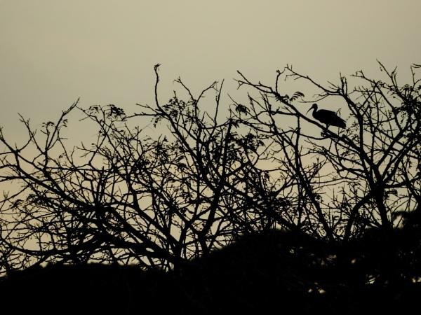 Dawn in the Arauca River by Potra