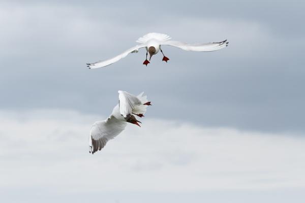 Gulls by nobby1