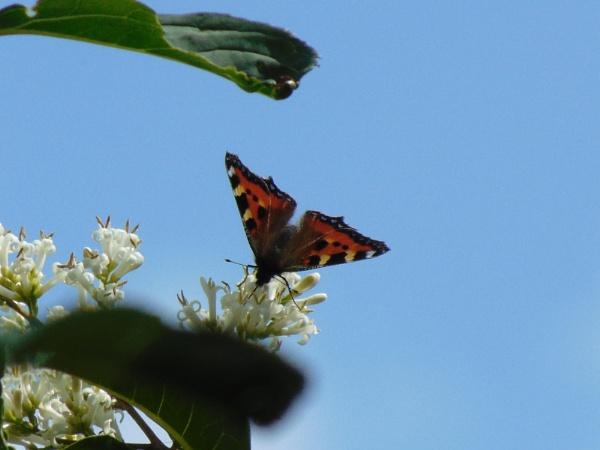 flutter by by alixzan