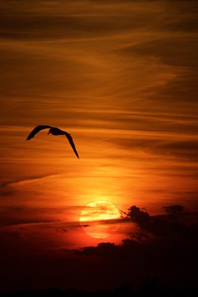 Avalon Sunset by dfawbert