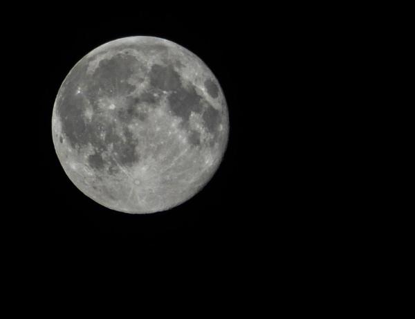 Blue Moon by Weasellady