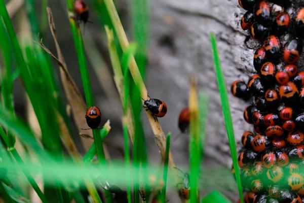 Beetle Bug Bash by shakeyhands