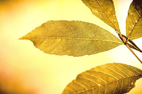 Golden by martfaulkner
